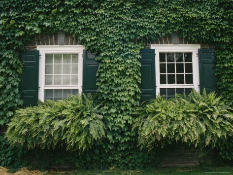Zelene fasady - Obrázok č. 97