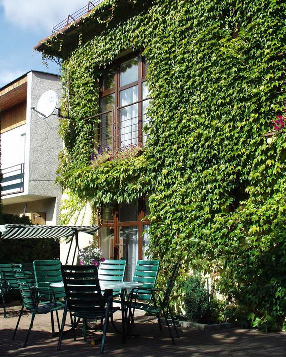 Zelene fasady - Na južné fasády sú zas lepšie opadavé druhy – zimné slnko voľne zohrieva nezatienenú časť domu
