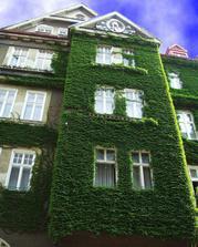 Architektúru domu zeleňou v žiadnom prípade nepokazíte, pohľad na zelené plochy je upokojujúci