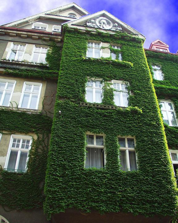 Zelene fasady - Architektúru domu zeleňou v žiadnom prípade nepokazíte, pohľad na zelené plochy je upokojujúci