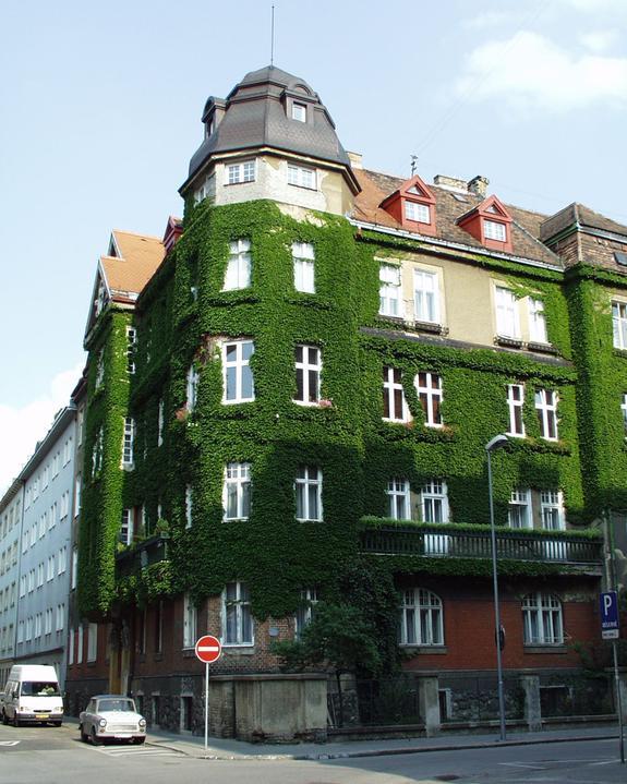 Zelene fasady - Popínavé rastliny majú veľký význam pri zazeleňovaní miest. Zlepšujú klímu - vylučujú kyslík, zachytávajú jemný prach z ovzdušia, vyparujú vodu a pôsobia ochladzujúco. Kde nie je miesto na horizontálne zelené plochy, je možnosť využiť vertikály.