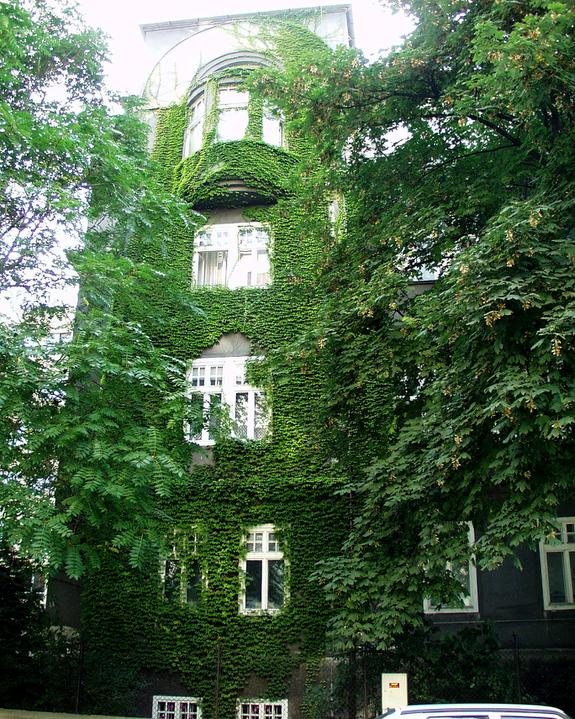 Zelene fasady - Názory, že popínavé rastliny škodia murivu a kazia fasádu sú predsudkami. Zeleň pôsobí esteticky  a zaujímavo.