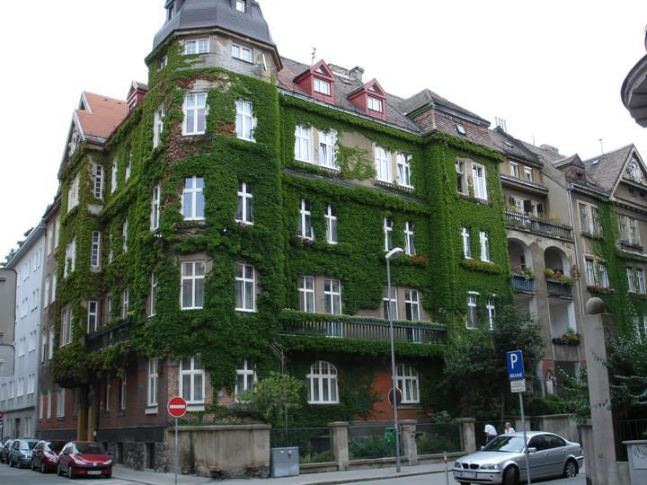 Zelene fasady - Popínavky sa dajú použiť bez nároku na priestor. Sú finančne nenáročné, väčšinou rýchlo rastú. Dom na šedivej ulici akoby ožil, určite každého poteší pohľad na takýto zelený kabát.