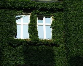Oči domu spokojne hľadia spoza huňatého zeleného kožúška.