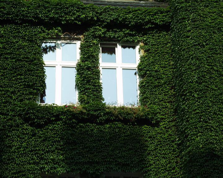 Zelene fasady - Oči domu spokojne hľadia spoza huňatého zeleného kožúška.