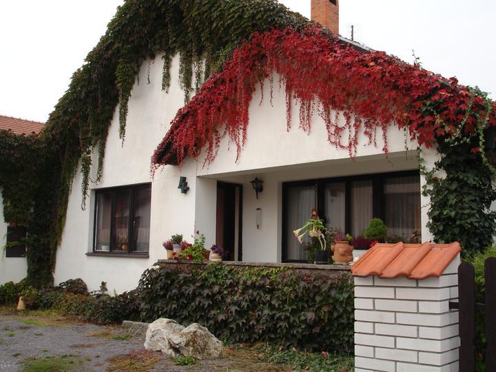 """Zelene fasady - Pavinič sa v tomto prípade nešplhá po čelnej fasáde hore. Keď porástol bočnú stranu domu  otočil smer rastu a vylepšil štít dvojfarebnou """"ofinou""""."""