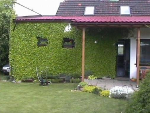 Zelene fasady - kuk