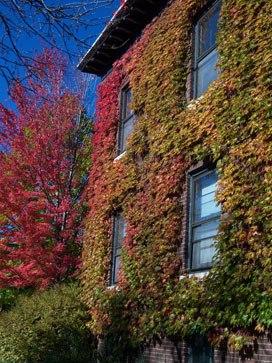 Zelene fasady - jesen zacina