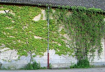 Zelene fasady - Obrázok č. 30