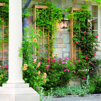 Zelene fasady - Romantika na stene - popinave ruže na treláži
