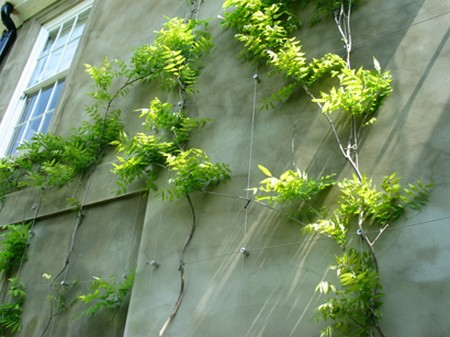 Zelene fasady - aj visteria sa da popinať, potrebuje dobru oporu