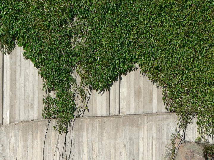 Zelene fasady - Obrázok č. 31