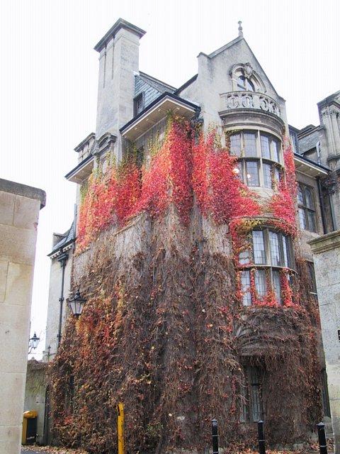 Zelene fasady - Oxford