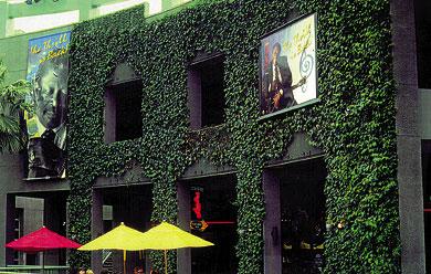 Zelene fasady - Vegetácia môže ušetriť náklady na vykurovanie a chladenie