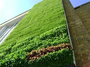 Niektoré konštrukcie zelených stien tvoria panely , ktoré oddelujú zeleň od stavebnej konštrukcie.