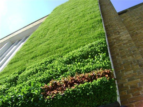 Zelene fasady - Niektoré konštrukcie zelených stien tvoria panely , ktoré oddelujú zeleň od stavebnej konštrukcie.