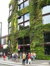 Zelené fasády prinášajú prirodzený svet do mestského prostredia
