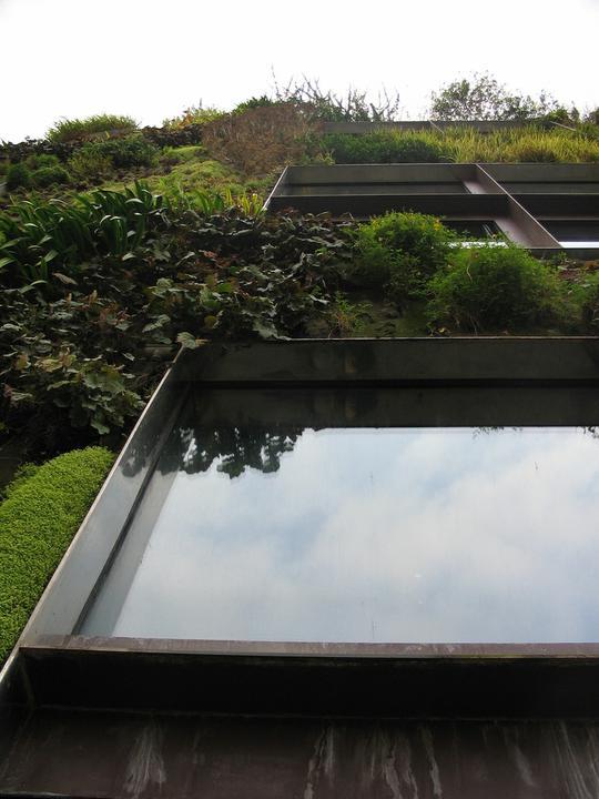 Zelene fasady - Špeciálne panely udržia rastliny -vo zvislej polohe sa dá pestovať aj šalát, bylinky, paradajky, jahody, či mrkva