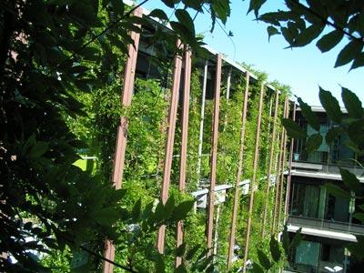 Zelene fasady - Nosná konštrukcia oddeľuje popínavé rastliny od steny.