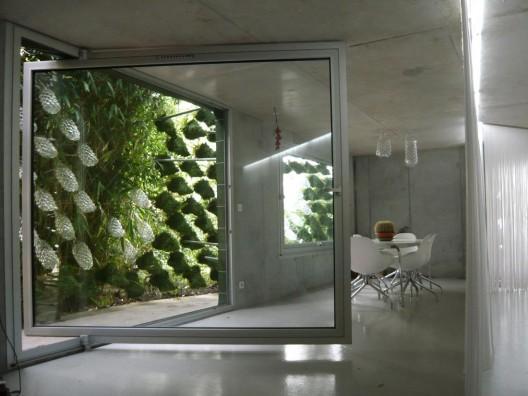 Zelene fasady - ...a priestor medzi oknami a predsadenou zelenou fasádou je efektný aj z interiéru