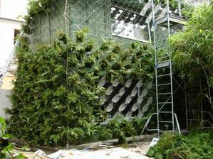 Tradične sú rastliny priamo na fasáde, tu Patrick Blanc vytvoril samostatný zelený obal a úplne zamaskoval stavbu....