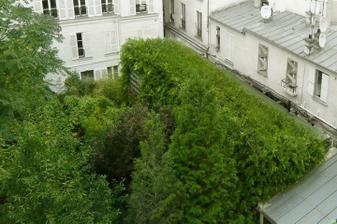 Svetlo dnu odráža prešpekulovaná sústava sklenených baniek medzi papraďami - slúžia tiež na zhromažďovanie dažďovej vody. Vnútri sa cítia ako v prírode a susedia nenadávajú na rozširujúcu sa výstavbu. Nevidia stavebný blok, ale krásnu divokú zeleň.