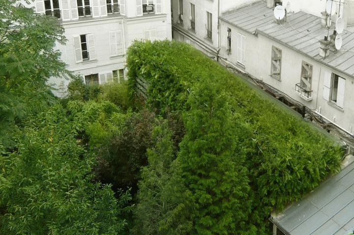 Zelene fasady - Svetlo dnu odráža prešpekulovaná sústava sklenených baniek medzi papraďami - slúžia tiež na zhromažďovanie dažďovej vody. Vnútri sa cítia ako v prírode a susedia nenadávajú na rozširujúcu sa výstavbu. Nevidia stavebný blok, ale krásnu divokú zeleň.