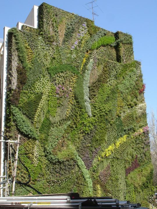 Zelene fasady - Príležitosť pre umelcov