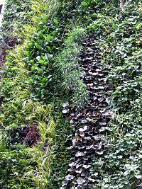 Zelene fasady - ako v záhradke na zemi ...