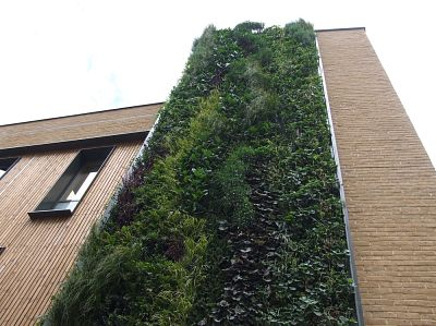 Zelene fasady - Westminster City School