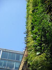 """Zelene fasady - """"ozelenenie"""" školy bola požiadavka stavebneho úradu. Keby aj u nas boli zamestnancami uradov taketo osvietene osoby"""