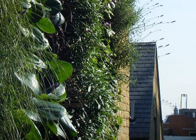 Zelene fasady - detail rastliniek
