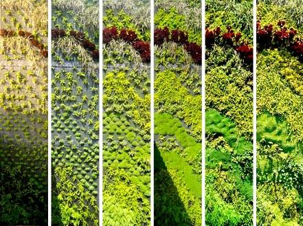 Zelene fasady - postupne sa rozrastaju a mohutneju ...