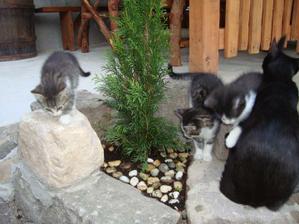 """kde sa pozriem všade sú mačiatka, volám ich """"mrvenica"""""""