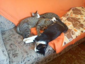 najlepšie sa spí na sedačke :-)