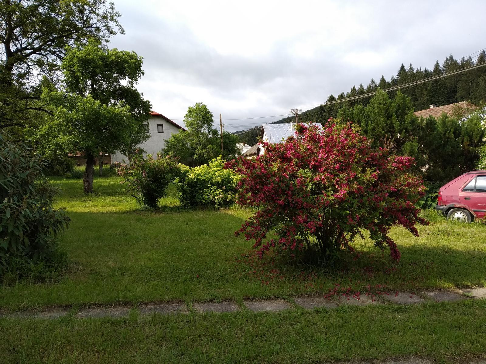 Babkina záhrada - Obrovská vajgela:-D