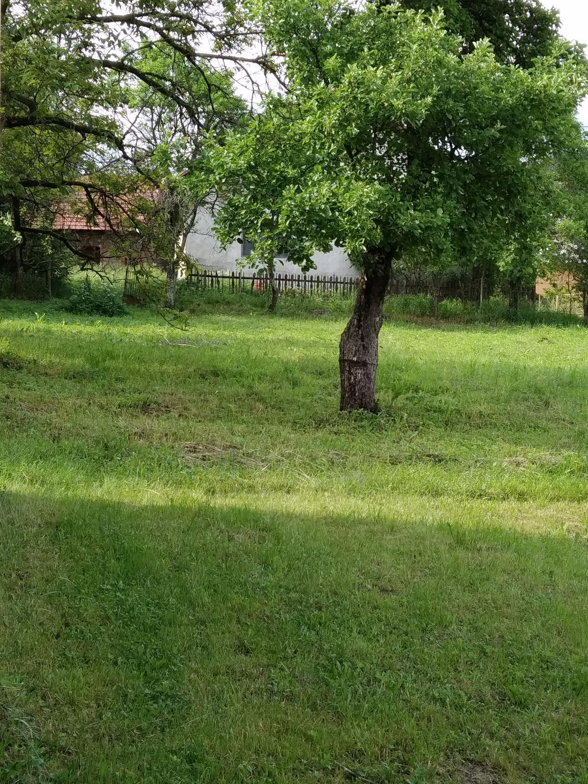 Babkina záhrada - Jabloň. V pozadí dom jej rodičov, teda mojej prababky, dom je z roku 1890 cca s kamennými maštaľami
