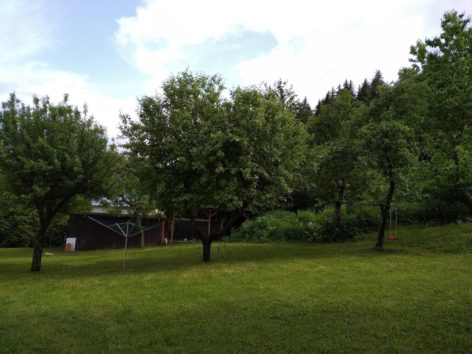 Babkina záhrada - Jablone