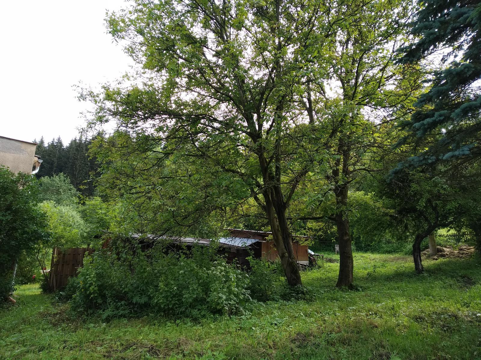 Babkina záhrada - Orechy
