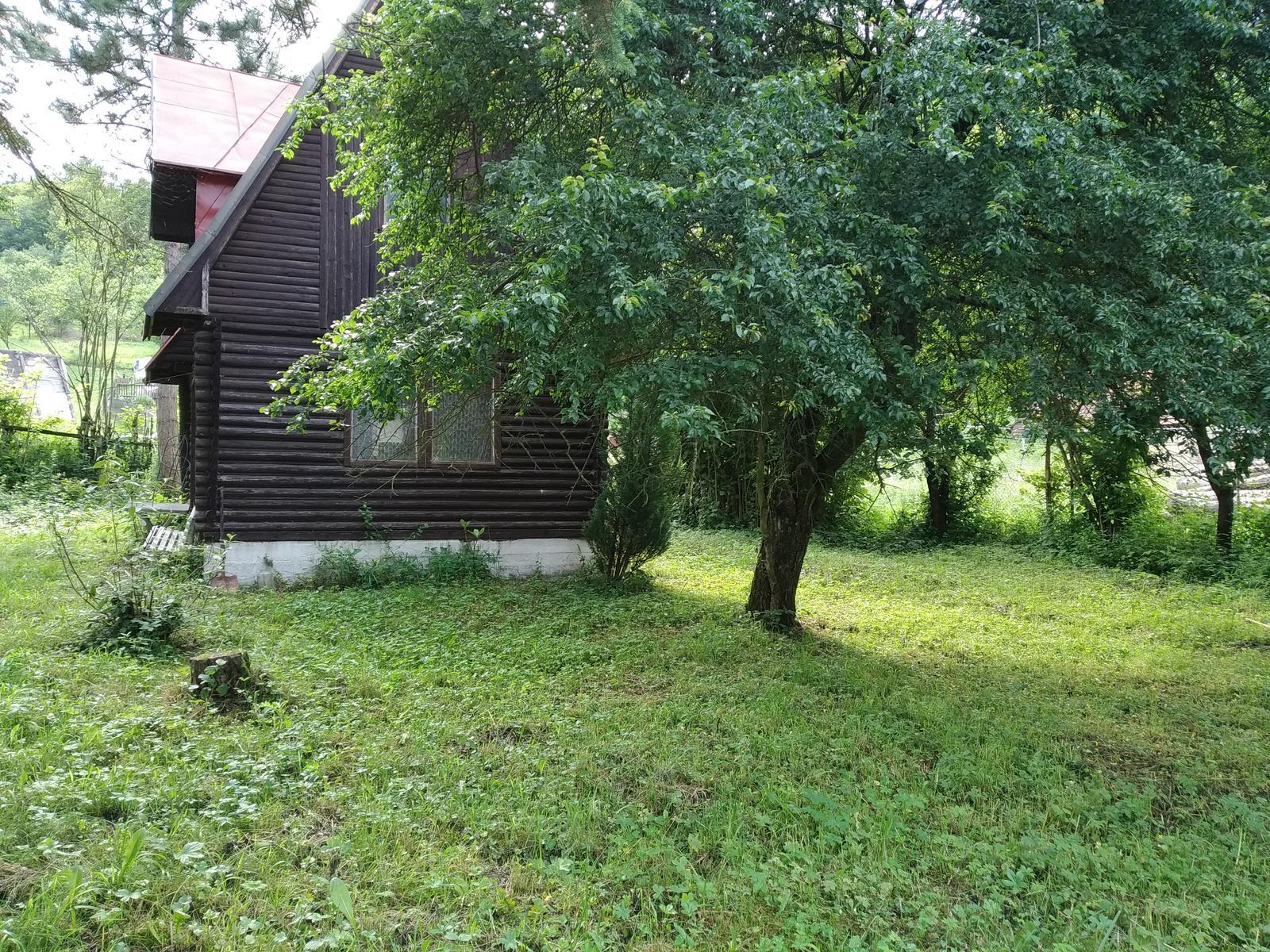 Babkina záhrada - Červená mirabelka pred druhou chatou