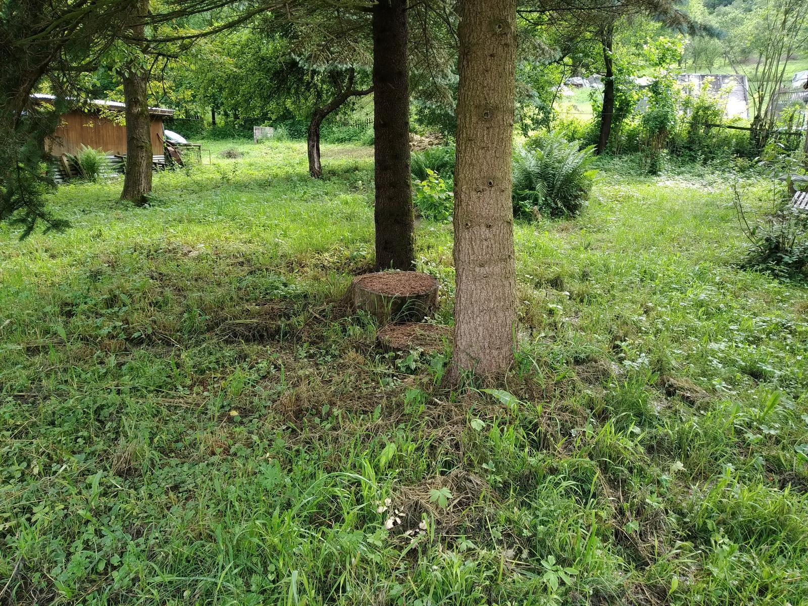 Babkina záhrada - Obrázok č. 10