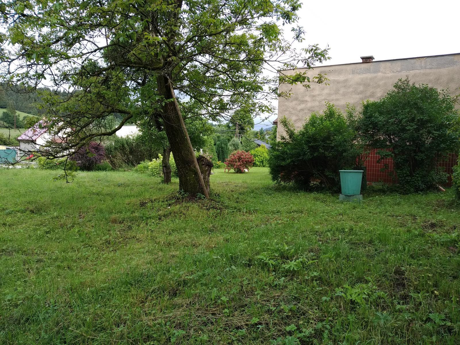 Babkina záhrada - Orech v strede, napravo zlatý dážď  a orgován.