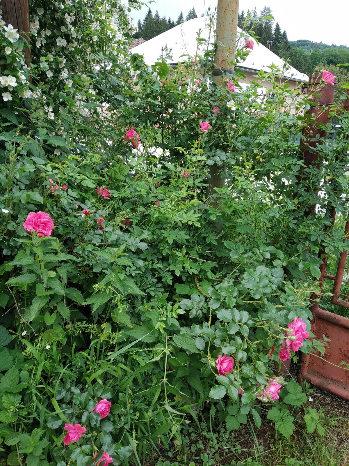 Babkina záhrada - Treba tomu dať formu