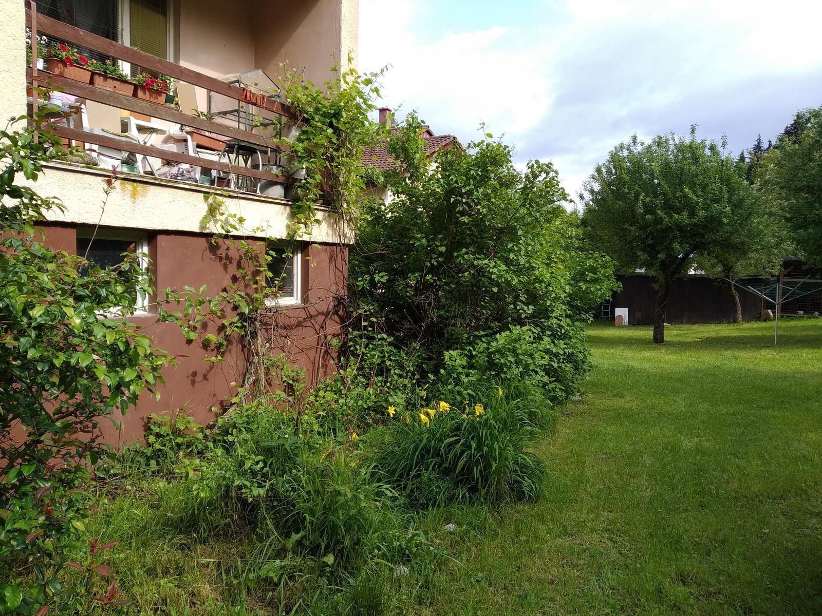 Babkina záhrada - Kde-tu ruža, kde-tu ľaliovka a aj hrozno