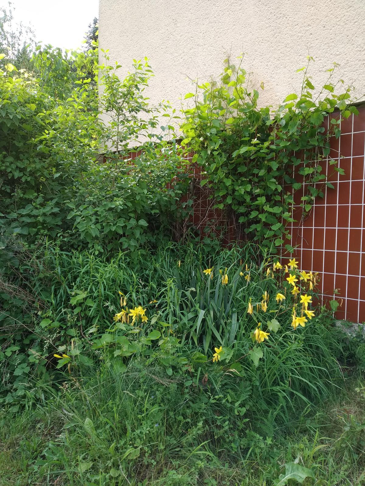 Babkina záhrada - Divočina