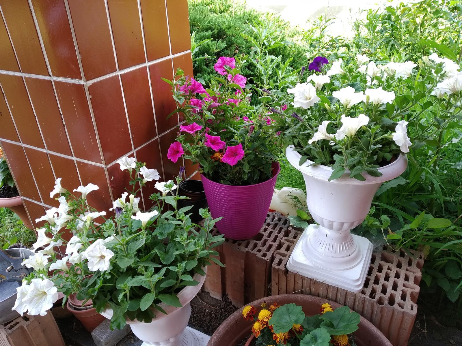 Babkina záhrada - Toto sú ony;-)