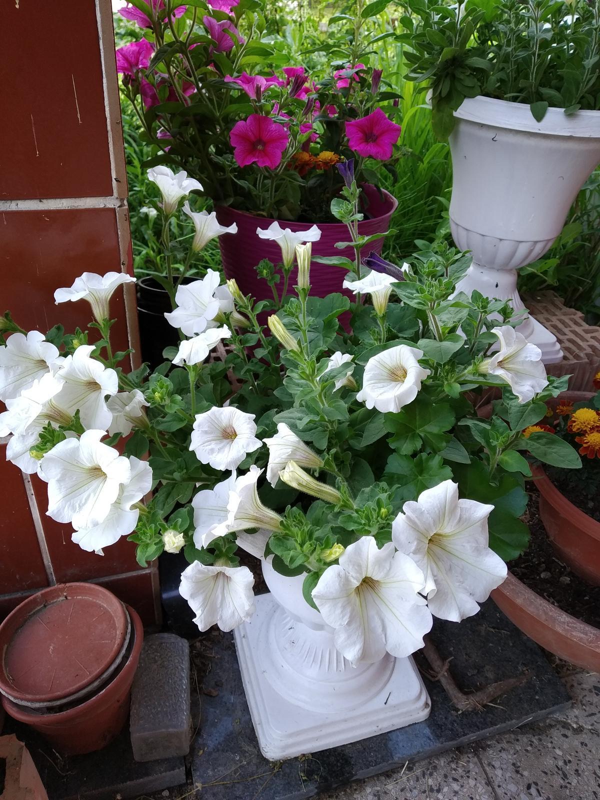 Babkina záhrada - Plus renovované kvetináče;-)