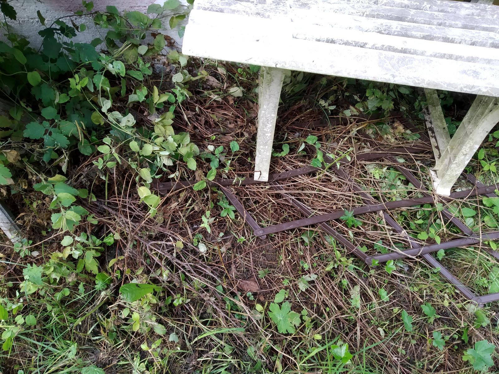 Babkina záhrada - Asi plamienok. Bol aj plôtik, keď sa dám do poriadku teraz najbližšie, opravím plôtik aj lavičku. Tá by potrebovala wapku a nový náter