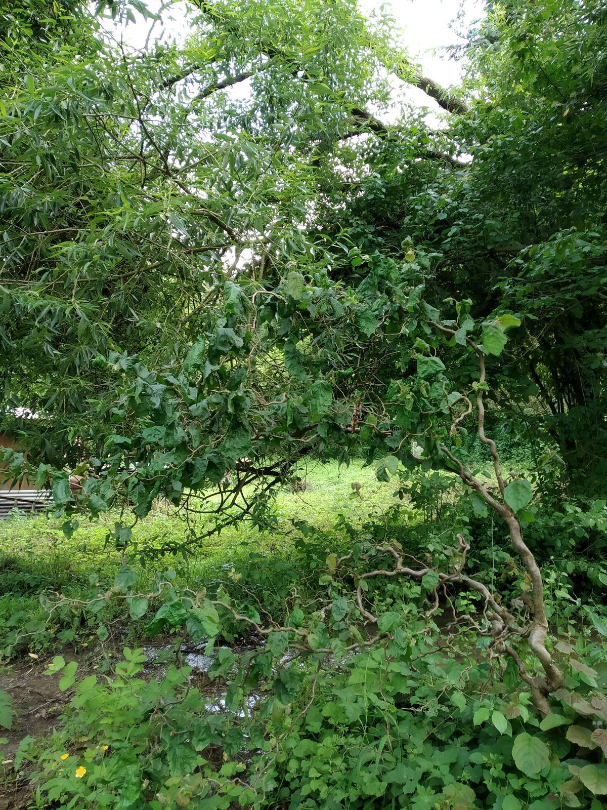 Babkina záhrada - Točená....nad potokom:-)