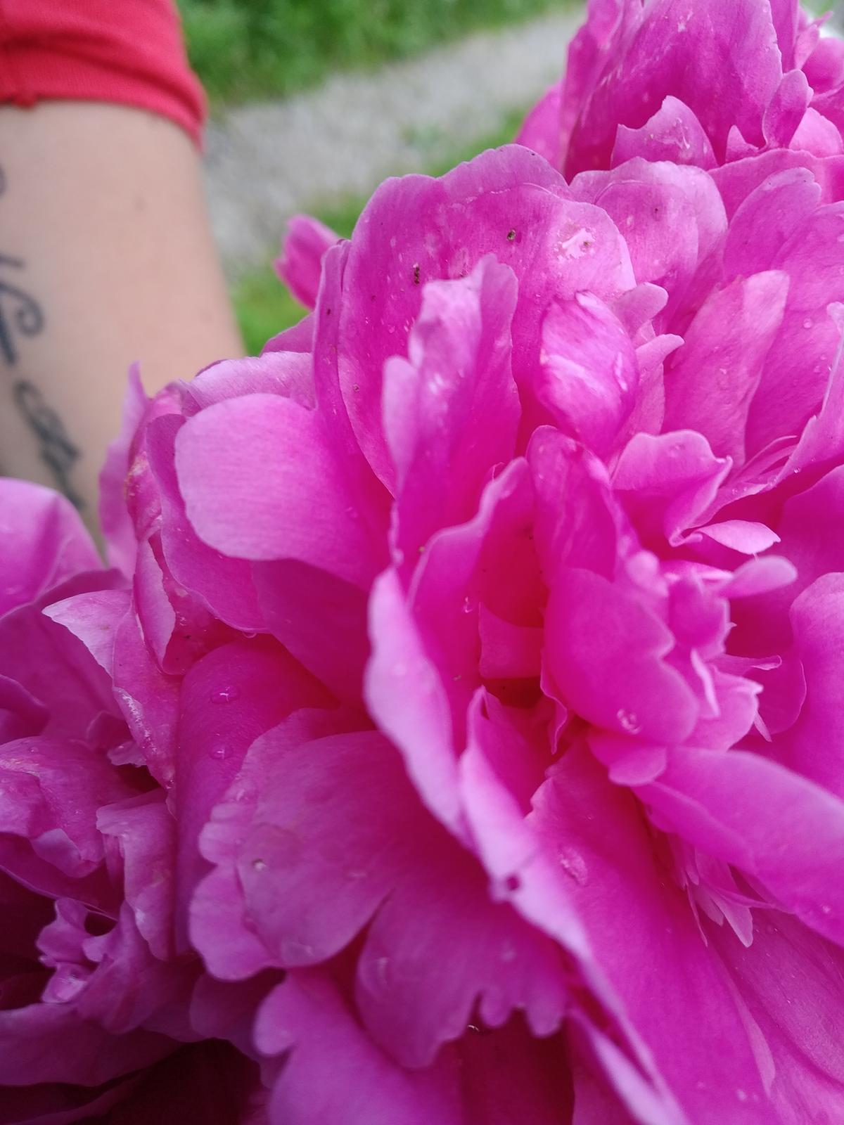 Babkina záhrada - Náááádherne voňajú